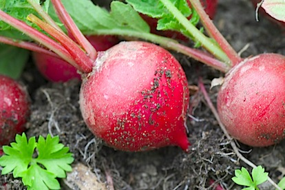 radishes #2 & pasta 1