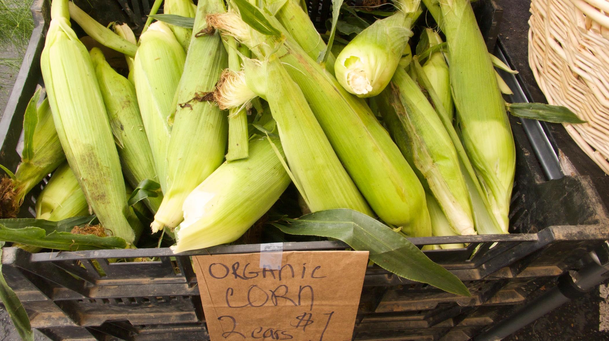 Fresh Corn Chowder Mixed Greens Blog