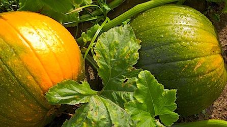 a mix - - - Oct- 08 26