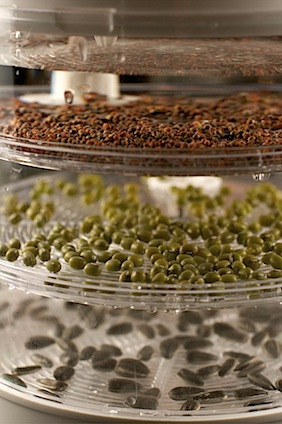 Sprouts24 of 25