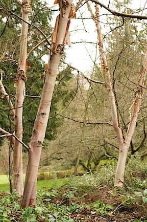 arboretumfragrancegarden68 of 118