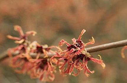 arboretumfragrancegarden87 of 118
