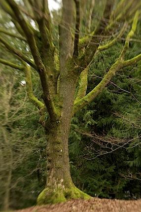 arboretumfragrancegarden99 of 118