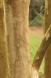 arboretumfragrancegarden116 of 118