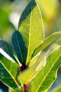 spring-herbs-1