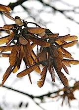 seedpods1 of 1