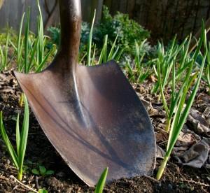 spring-planting-2-3