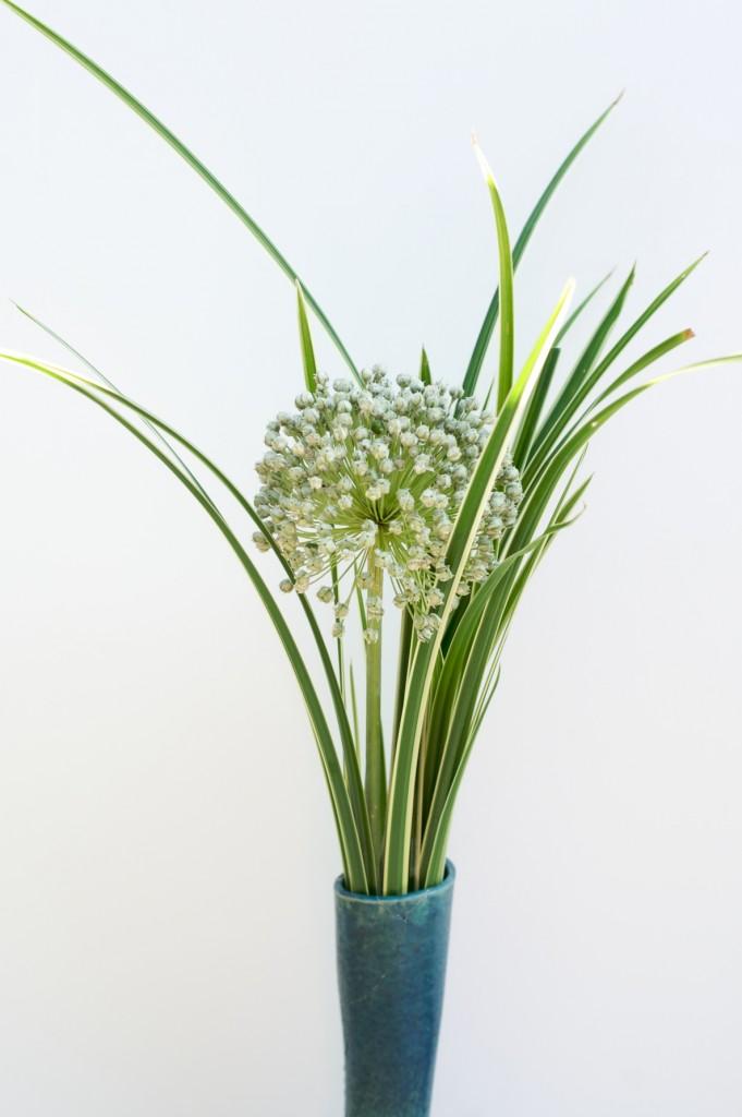 alium-flower-ornamental-grass-2