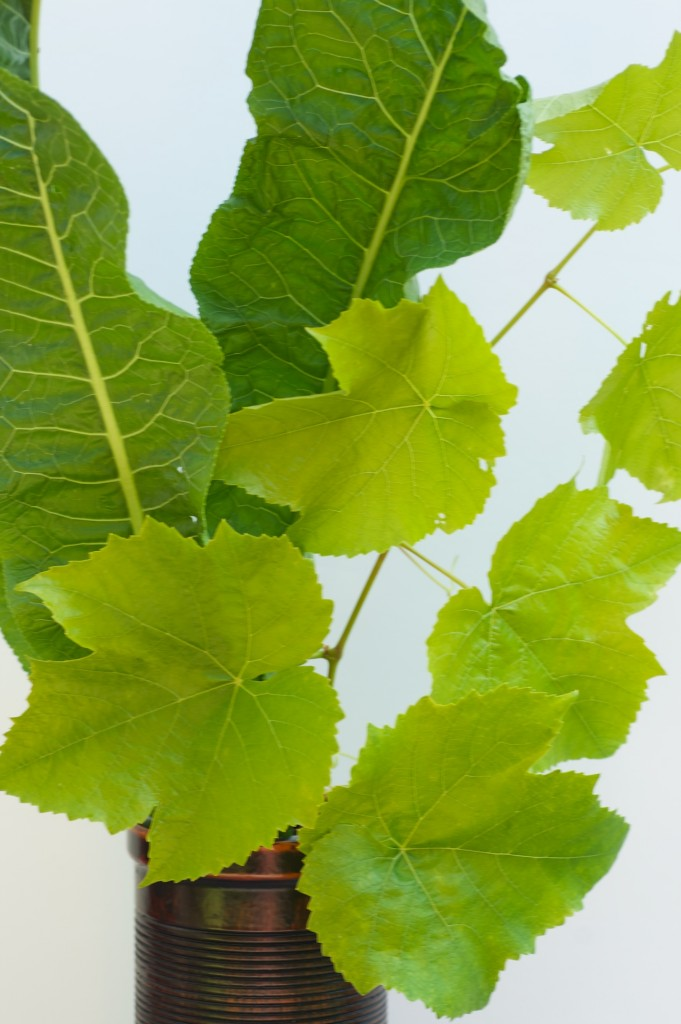 Horseradish leaves and grapevine. b-y-bouquet-horseradish-2