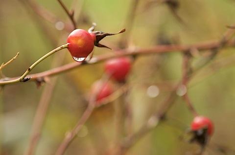 berries10 of 28