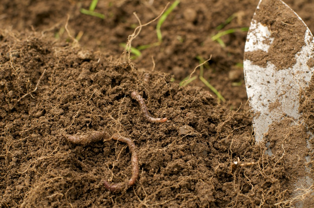Soil & Worms