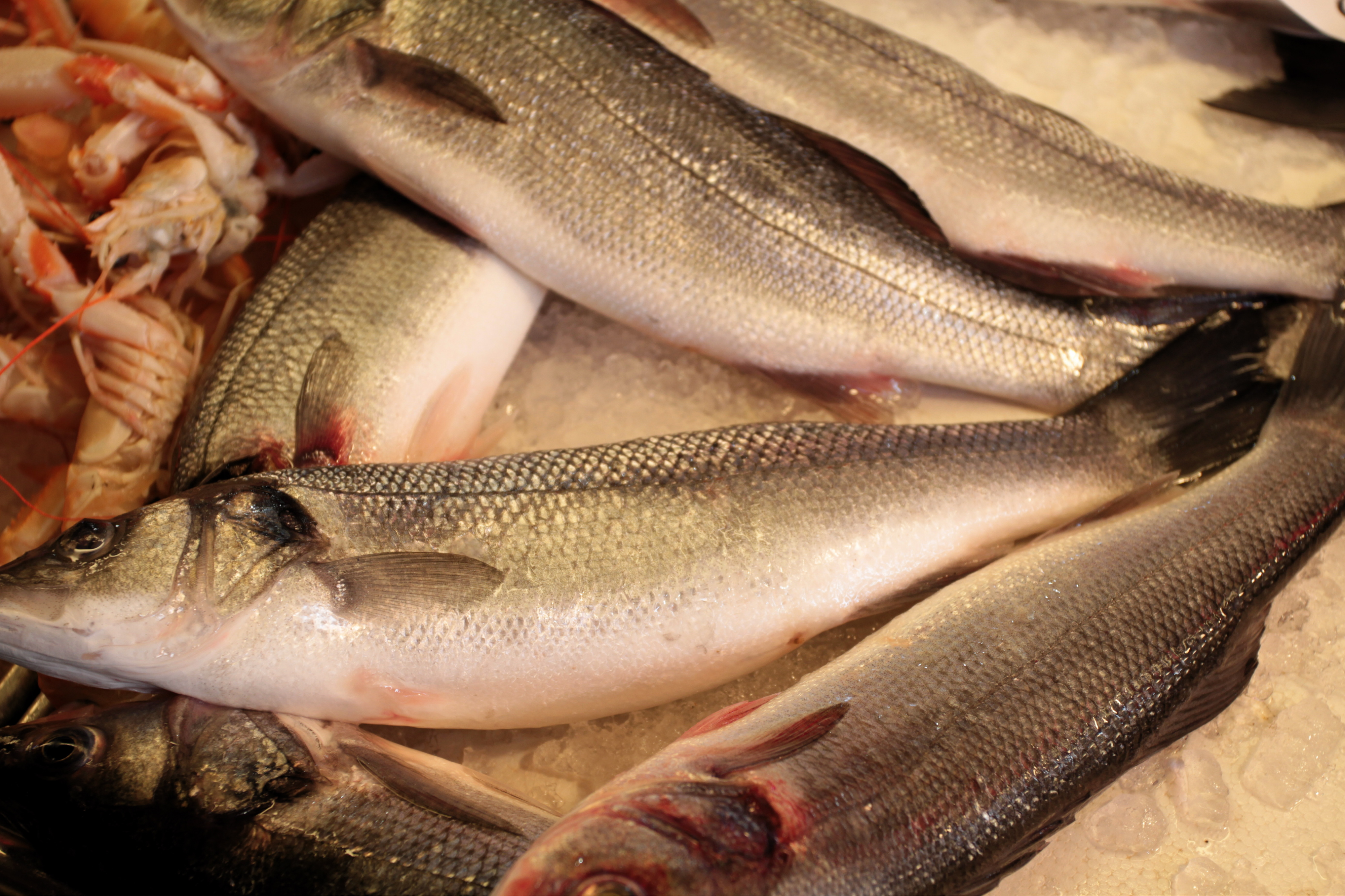 Seasonal food wherever you are mixed greens blog for What is branzino fish