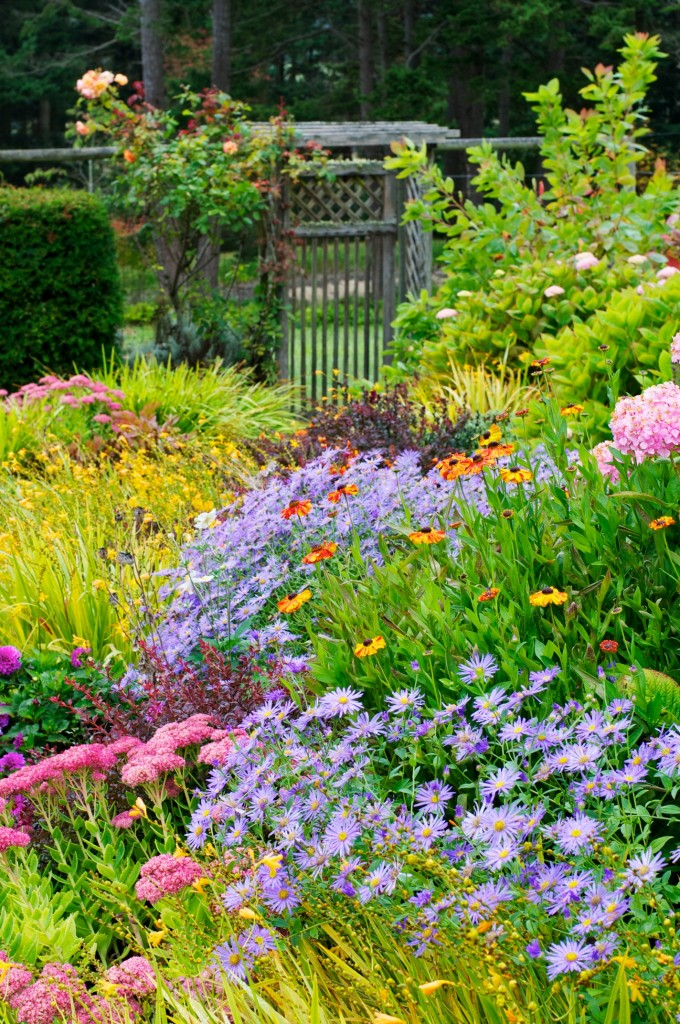 Patsy's Garden