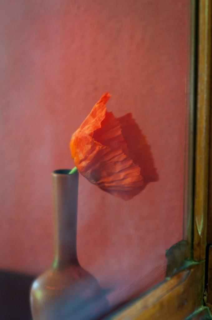 Reflection of Poppy